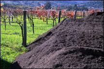 vineyard_compost