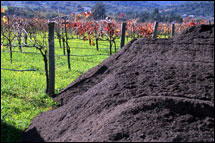 vineyard_compost