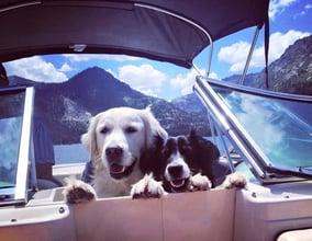 Greggs_dogs