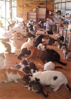 haydos cats