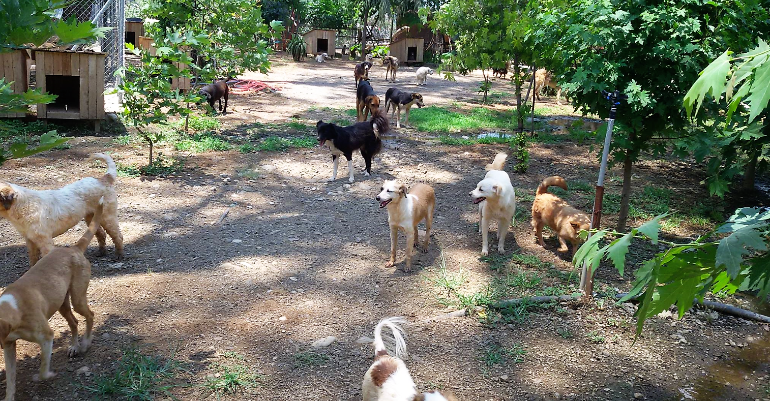 haydos dogs