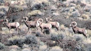 sheep group.png
