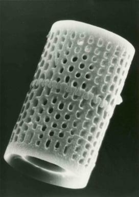 Single_Diatom_-_Large